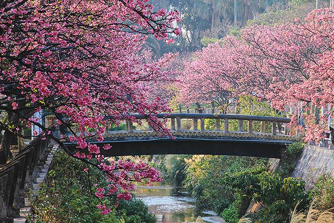 ELLE Inspiration: цветение сакуры
