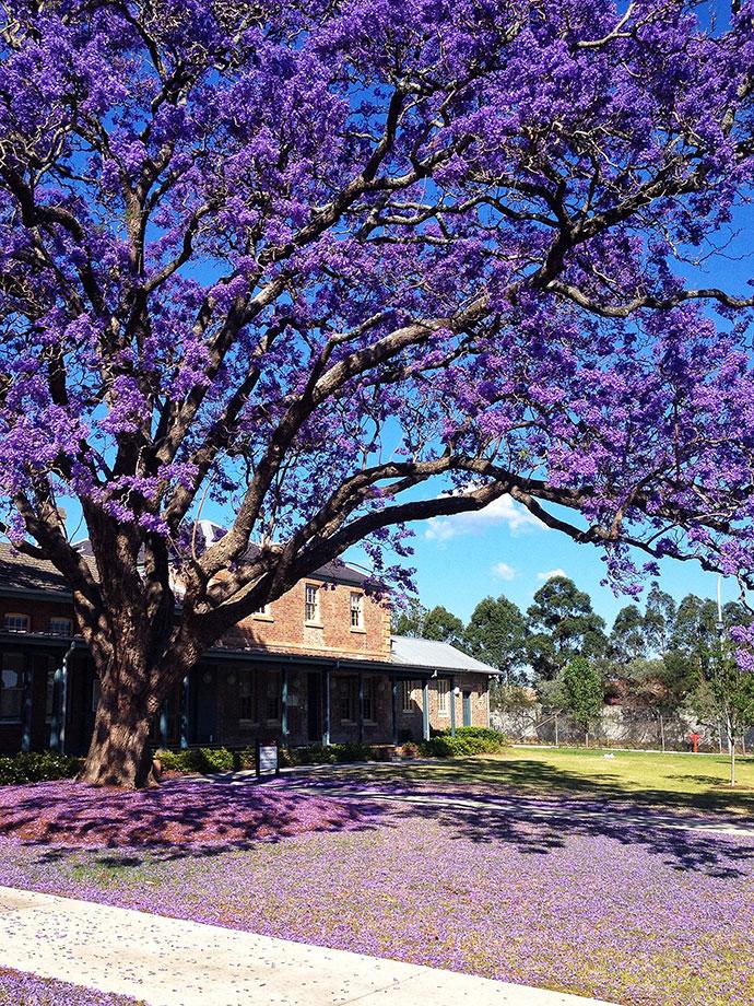 самые красивые деревья мира фото 4