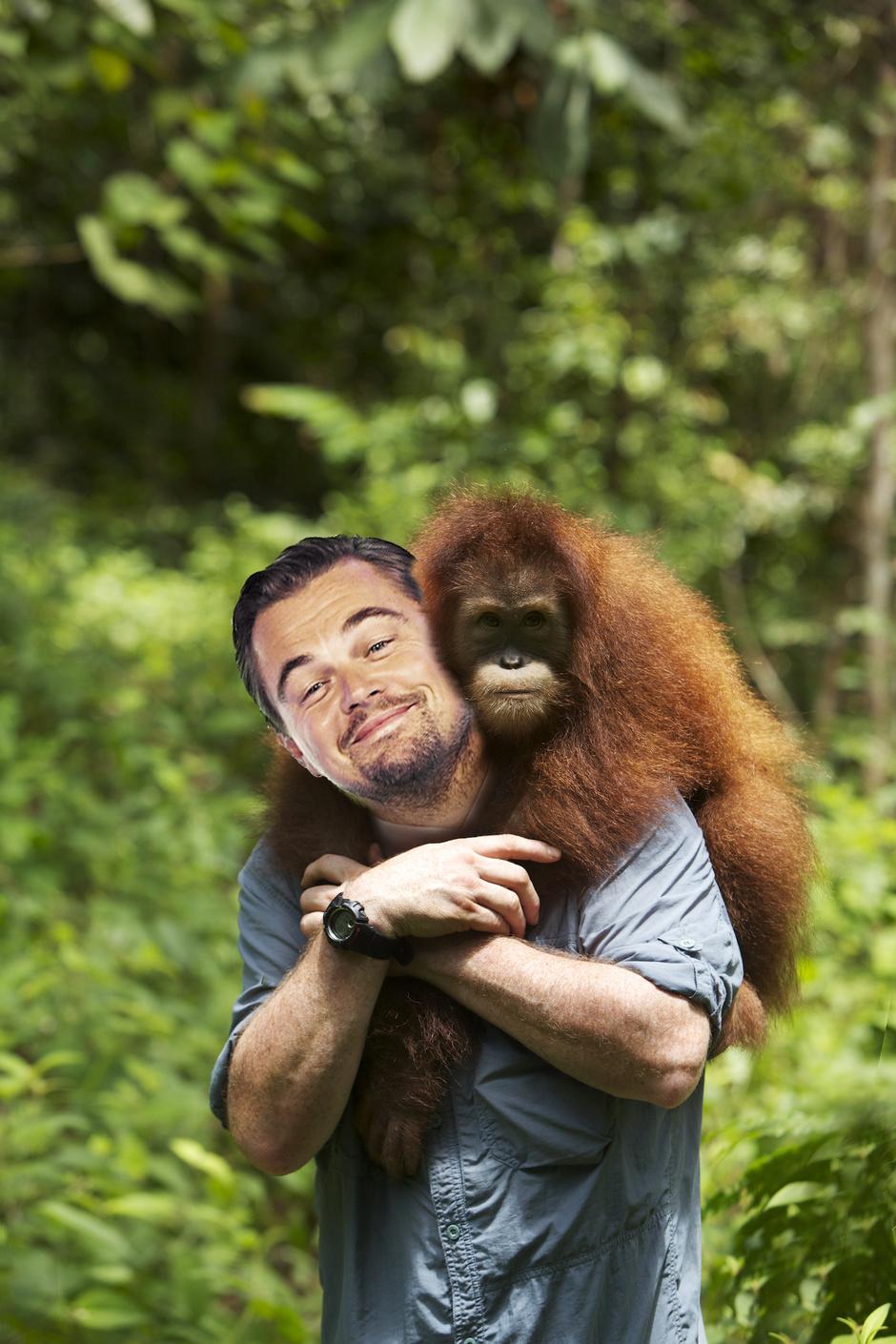 Леонардо Ди Каприо повстречался с орангутангом на острове Суматра