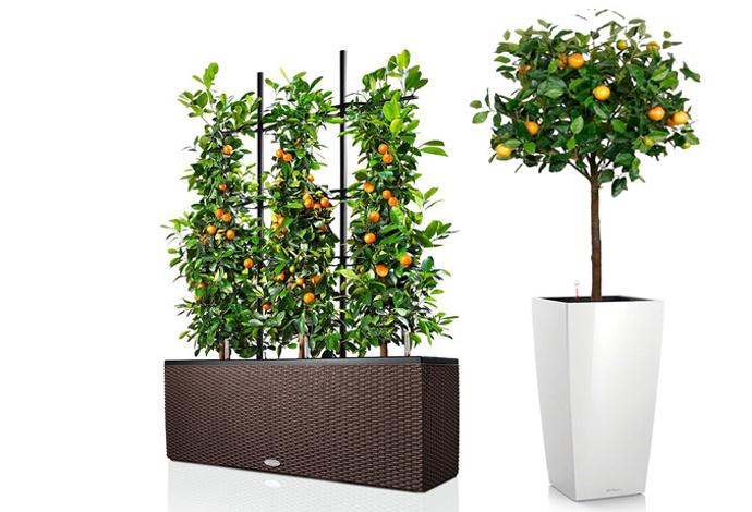 Растения и кашпо с системой автополива, Lechuza, www.lechuza.ru