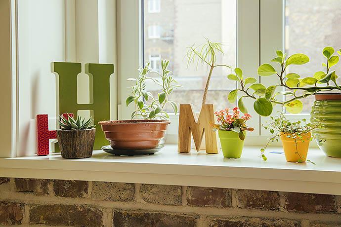 Какие растения очищают воздух