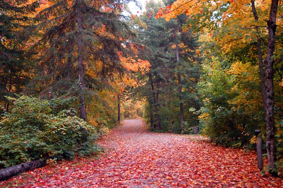 Algonquin Park, Онтарио, Канада