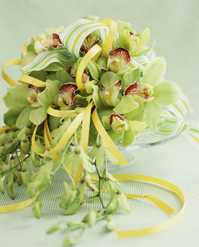 Зеленая орхидея цимбидиум