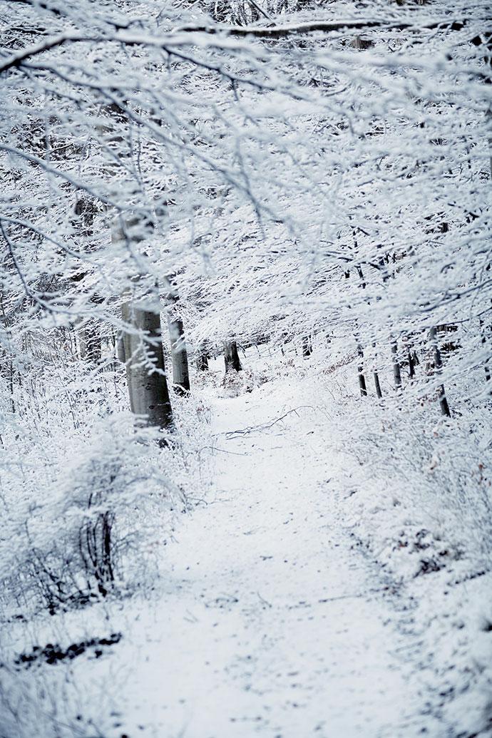 Парк усадьбы зимой
