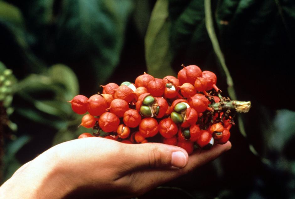 экзотические ягоды
