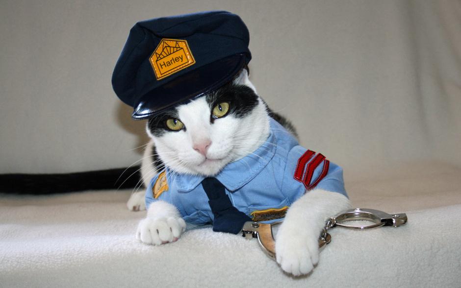 Британские полицейские могут взять на службу кошек