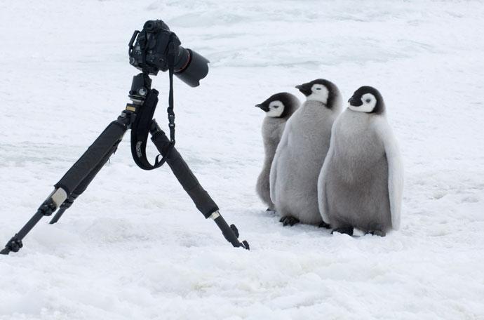 pinguin9