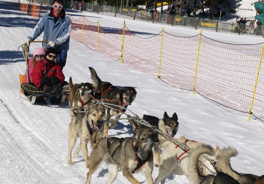 В Андорре можно покататься на собачьих упряжках