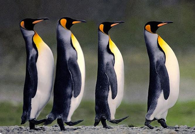 ELLE Inspiration: пингвины