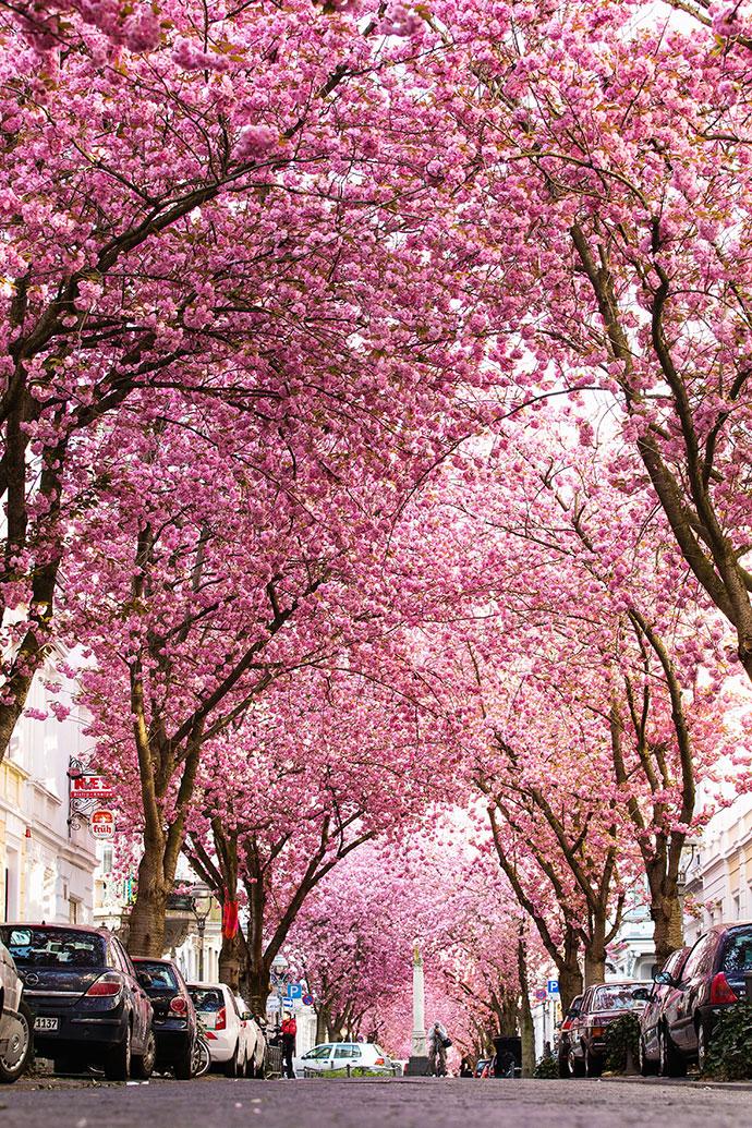 самые красивые деревья мира фото 5