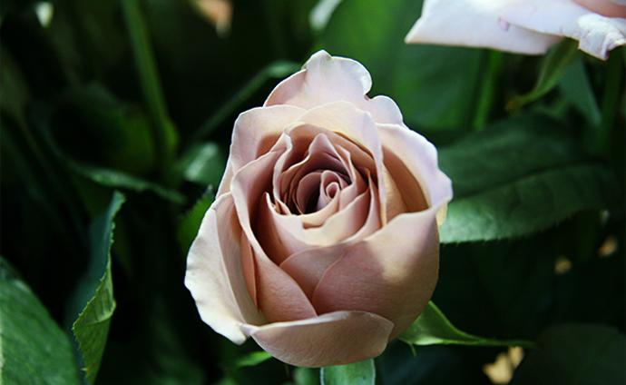 Модный букет: советы флориста 11