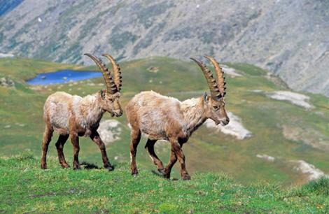 Итальянские Альпы: 10 главных достопримечательностей долины Аосты | галерея [8] фото [3]