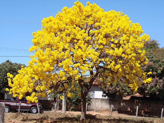 самые красивые деревья мира фото 3